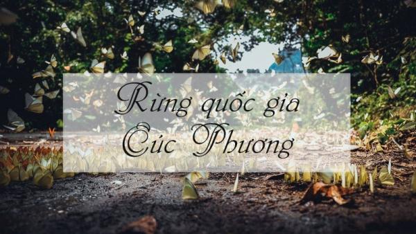 gia-thue-xe-45-cho-di-vuon-quoc-gia-cuc-phuong